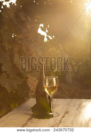 Glass With White Wine In Vineyard On Old Table. Vineyard At Sunset. White Wine Glass, Wine Bottle An