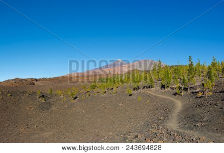 Beautiful View Of The Footpath To The Pico Viejo And Pico Del Teide From Montana Negra, Tenerife Isl