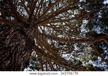 Under The Shade Of A Big Tall Large Robust Ancient Tree With Sky Background. Antique Forest Area. Na