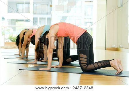 Group Of Asian Women And Man Practicing Yoga, Fitness Stretching Flexibility Pose, Working Out, Heal