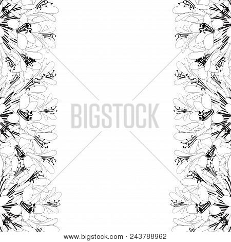 Agapanthus Outline Border - Lily Of The Nile, African Lily. Vector Illustration. Isolated On White B