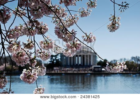 The Lincoln memorial at spring