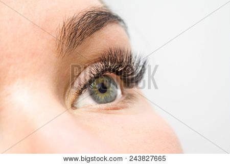 Eyelash Extension Procedure. Woman Eye With Long False Eyelashes. Close Up Macro Shot Of Fashion Eye