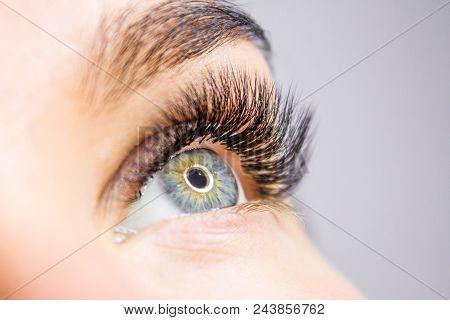 Eyelash Extension Procedure. Woman Eye With Long False Eyelashes. Close Up Macro Shot Of Fashion Eye
