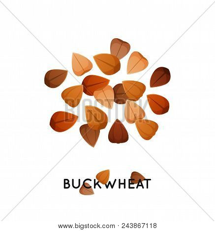 Agro Culture Buckwheat Seeds Icon. Cereals Buckwheat Illustration.