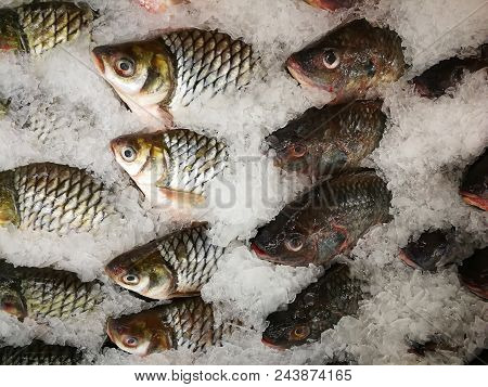 Nile Tilapia Frozen In The Market,frozen Nile Tilapia Fish In A Pile Of Ice At Supermarket, Mixed Fi