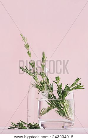 Green Rosemary Twigs In Transparent Glass Vase On Soft Pink Pastel Background. Fresh Season Gentle B