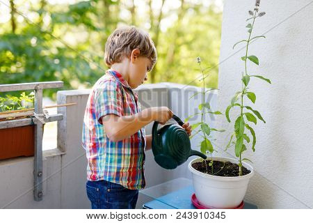 Active Little Preschool Kid Boy Watering Plants With Water Can At Home On Balcony. Little Child Help