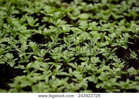Growing seedlings in peat pots. Plants seeding in sunlight in modern botany greenhouse, horticulture and cultivation of ornamental plans, top view poster
