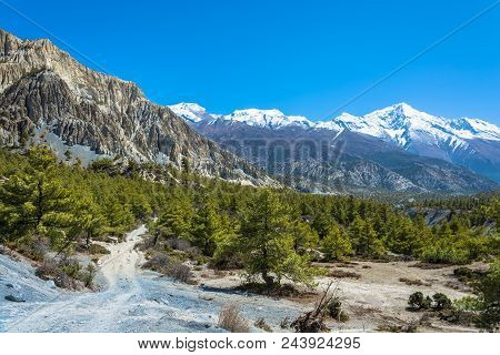 Beautiful Mountain Landscape With Coniferous Forest And Snowy Mountains In Himalayas, Nepal.