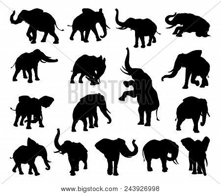 A Set Of Elephant Animal Silhouettes In Various Poses