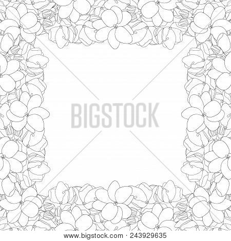 Jasminum Sambac - Arabian Jasmine Outline Border On White Background. Vector Illustration.