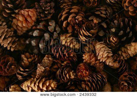 Pinecone Background