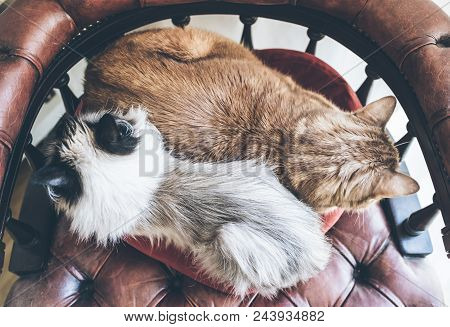 Top View Of Two Domestic Cats Side By Side Resting On Red Armchair