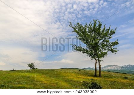 Beautiful Landscape With Lone Tree Stands On A Green Field Or Hill. Dramatic Field View. Loneliness