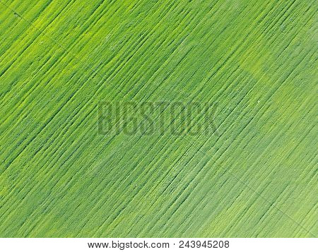 Aerial Drone View On On Field With Ranks Of Green Shoots