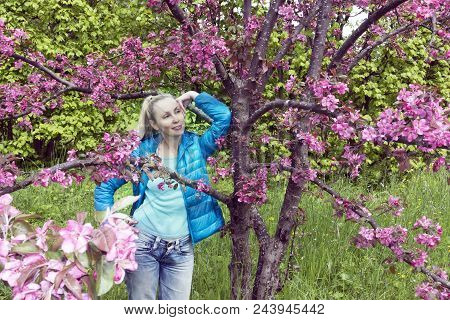 Young Attractive Woman Standing Near The Blossoming Crimson Apple Tree