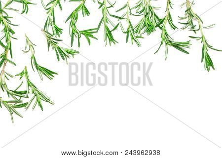 Rosemary Sprigs As Frame On White Background. Fresh Herbs. Top View, Copy Space