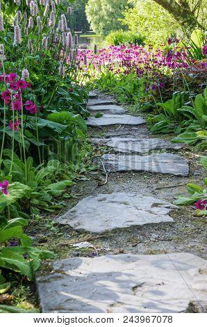 A Pretty Path Leading Through Fuchsia Colored Flowers.