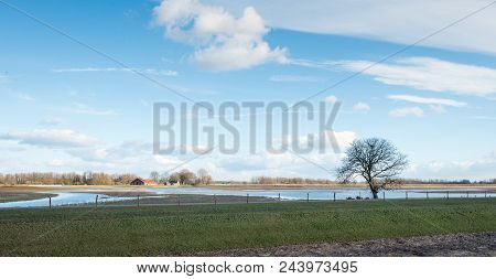 Whimsically Shaped Tree In The Foreground Of A Partially Flooded Polder In The Netherlands. It Is A