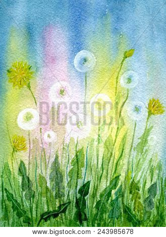 Field Of Dandelions. Hand-painted Watercolor Illustration And Paper Texture