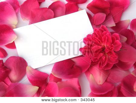 Petals On White