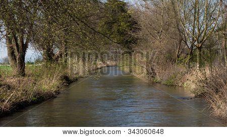 Downstream Creek In A Reparian Forest In Spring