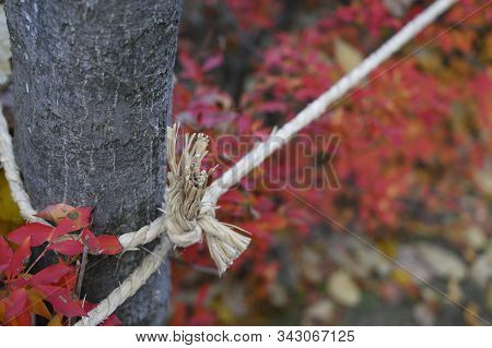 Rope Tied To A Tree Nature Background