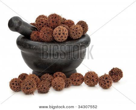 Sweetgum fruit herb used in traditional chinese herbal medicine in a black marble mortar with pestle over white background.  Lu tong.