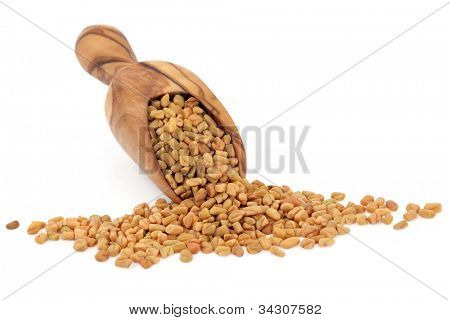 Fenugreek seed in an olive wood scoop over white background, used as seasoning and in traditional chinese herbal medicine. Fabaceae.