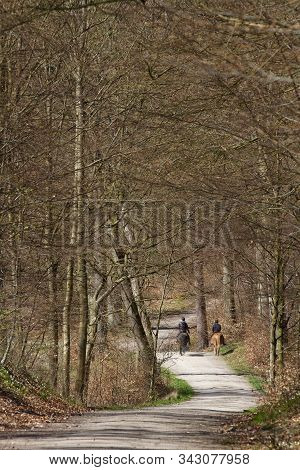 Riding Horse In A Forest In Denmark Scandinavia