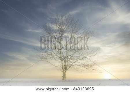 Lone Single One Tree In White Winter Fog Scene For Peace Tranquility And Mindfulness And Low Sun Lig