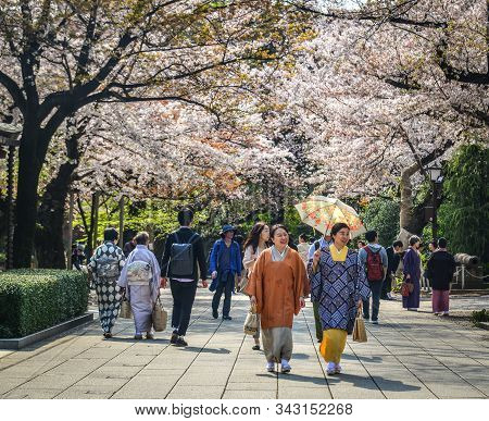 Tokyo, Japan - Apr 7, 2019. Women In Kimono Dress Enjoying Cherry Blossom (hanami). Hanami Festivals
