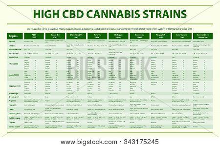 High Cbd Cannabis Strains Horizontal Infographic Illustration About Cannabis As Herbal Alternative M