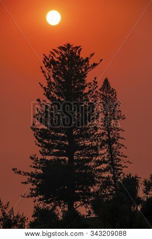 A Red Sunrise In Smokey Skies Over Pine Trees At Burleigh Headland, Gold Coast.