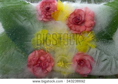 Background Of Orange   Balsamine And Yellow   Flower   Frozen In Ice