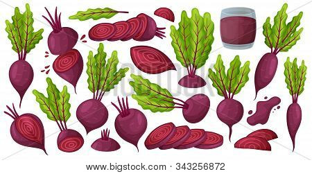 Vegetable Of Beet Vector Cartoon Set Icon. Vector Illustration Beetroot Root On White Background .is