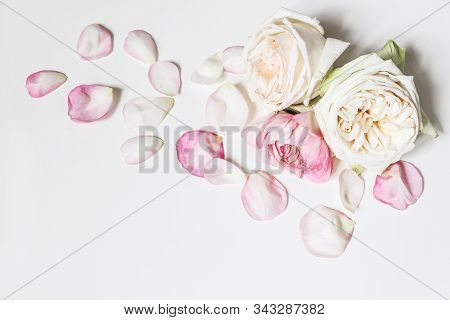 Close Up Of Blooming Pink Roses Flowers And Petals Isolated On White Table Background. Floral Frame
