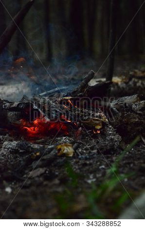 Glowing Coals Of Bright Red Color. Smoke Over The Coals. Hot Coals Burn With Wood. The Smoldering Co
