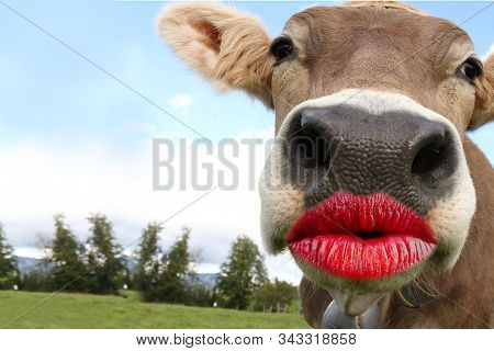 Cow Head. Funny Animal With Kissing Lips Cards For A Thank You, Birthday, Invitation Or Other Events