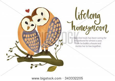 Happy Valentine Day Vector Textured Barn Owl Animal Card In A Flat Style With Quote And Real Facts A