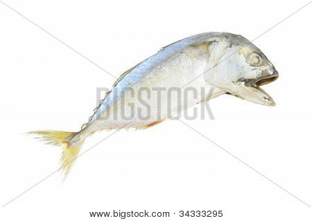 Mackerel cooked steam fish on white background. poster