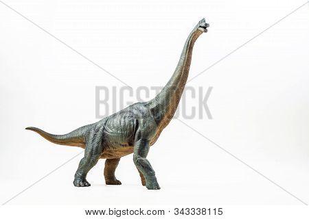Brachiosaurus ,dinosaur On White Background