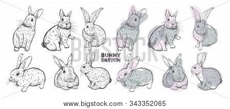 Rabbit Set Ink Hand Drawn.bunny Sketch Style, Isolated In White Background..
