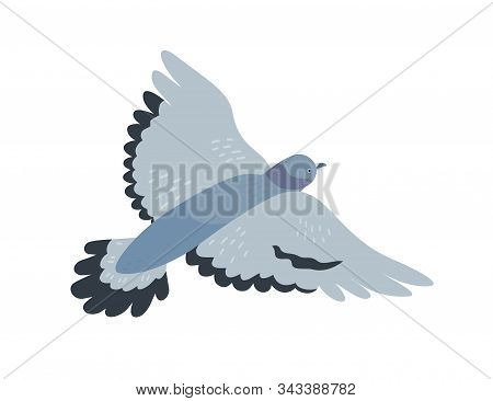 Flying Pigeon Flat Vector Illustration. Free Animal With Dark Grey Plumage. Gray Dove With Spread Wi