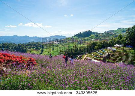 Lily Flower On Green Leaves In Garden, Mon Cham Hill , Chiang Mai, Thailand, Flower Garden Backgroun
