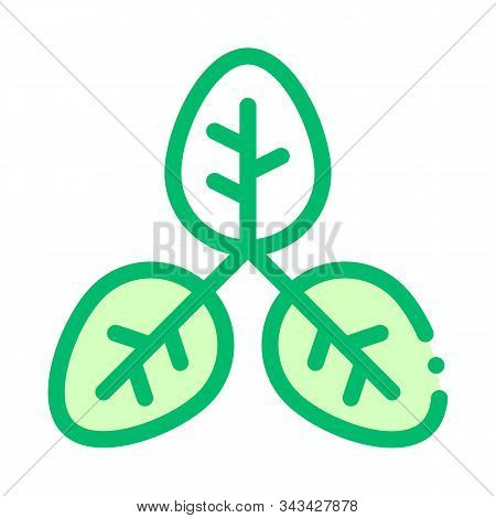 Bush Offshoot Plant Leaves Vector Thin Line Icon. Organic Cosmetic, Natural Component Plant Leaf Lin