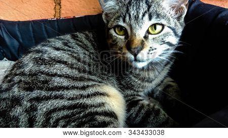 Gato, Felino, Animal De Estimação, Filhote, Pet