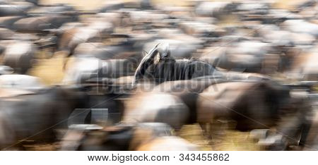 Herd of running white-bearded wildebeest during the annual great migration in the Masai Mara, Kenya. Intentional slow shutterspeed panning shot with motion blur.