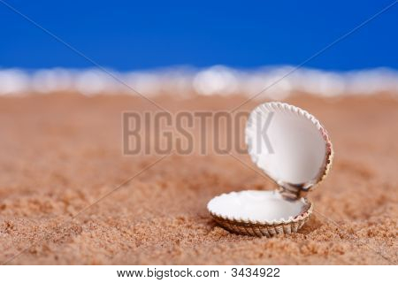 Opened Sea Shell On Beach Sand And Blue Sky Background